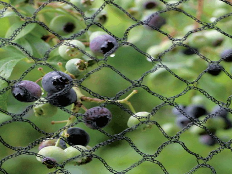 Fruit Cage Net 12 Meter Wide