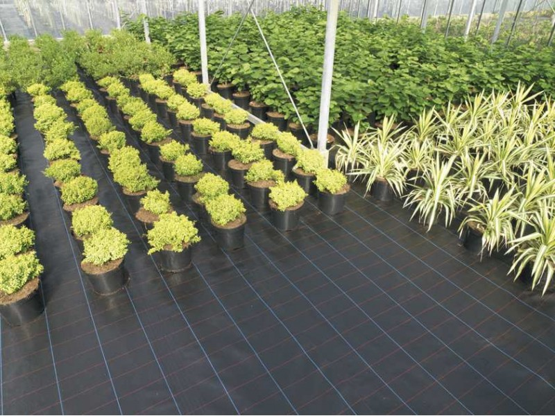 Premium Ground Cover 1 Meter Wide
